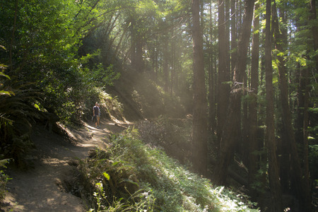 natur: Natur Trail in Northern California