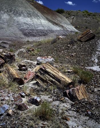 petrified: Petrified Forest, Arizona Stock Photo