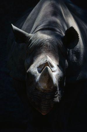 bocinas: Rinoceronte  Foto de archivo