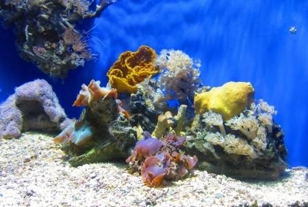 carlo: Aquarium in Monte Carlo