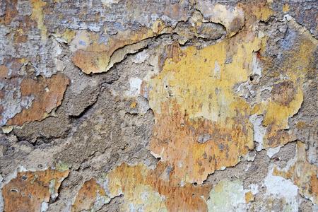 peeling paint: Peeling paint on old wall