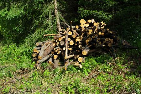 timber harvesting: Timber Harvesting Stock Photo