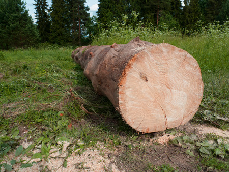 industrie: Lumber on field by forest Stock Photo