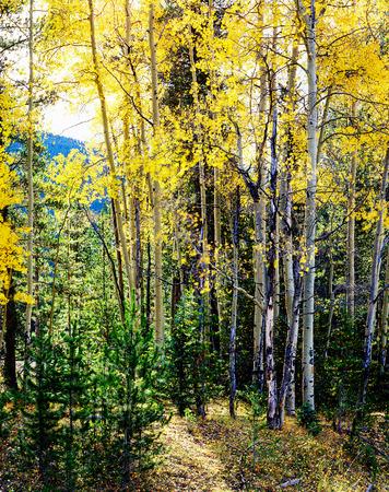 rocky mountains colorado: Fall in Rocky Mountains, Colorado Stock Photo