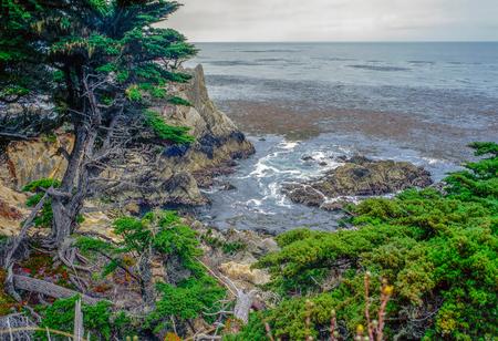 Monterey Cyprus, California Фото со стока - 98700732