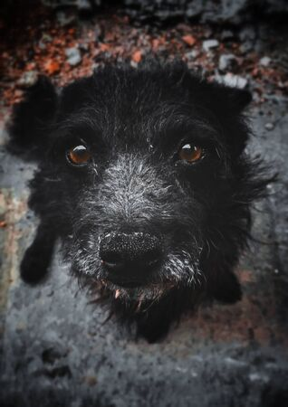 cute old black stray dog ?? with brown eyes sitting on the rocks looking into the camera Foto de archivo