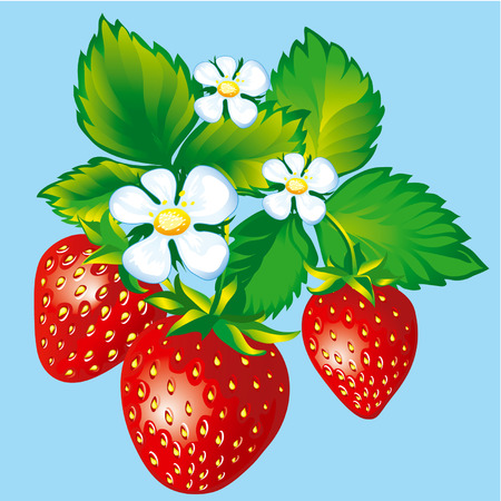 Strawberries With Blossoms And Leaves Ilustrace