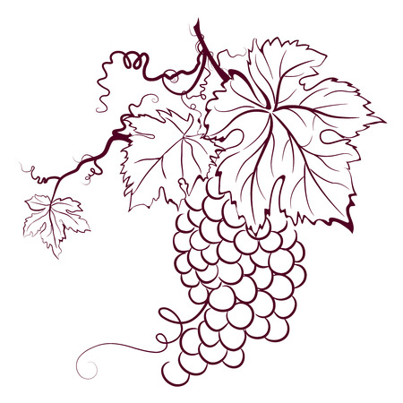 Grapes With Leaves Stock Vector - 3651709