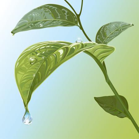 waterdrops: Waterdrops On Leaves