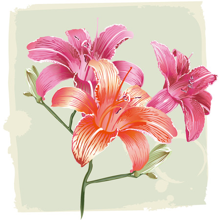 Lily Flowers On Grunge Background Vector