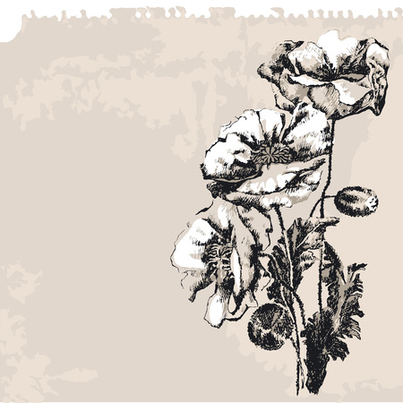 memory loss: Poppy Flower Illustration