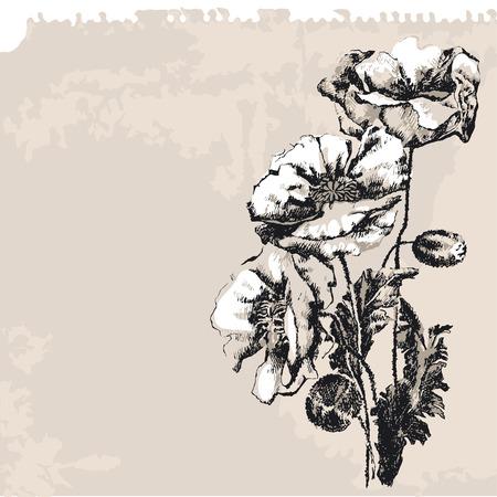 Poppy Flower Stock Vector - 3759305