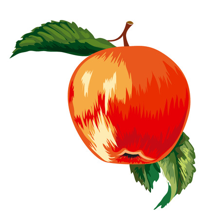 Red Ripe Apple With Leaves Stock Vector - 3759179