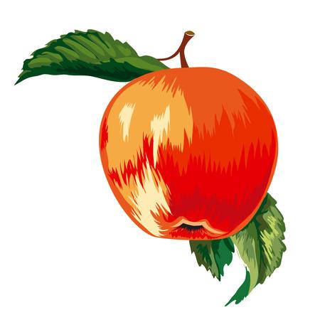 Rode rijpe appel met bladeren Stock Illustratie