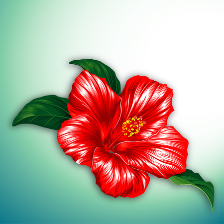 flora vector: Red hibiscus blossom flower with leaves