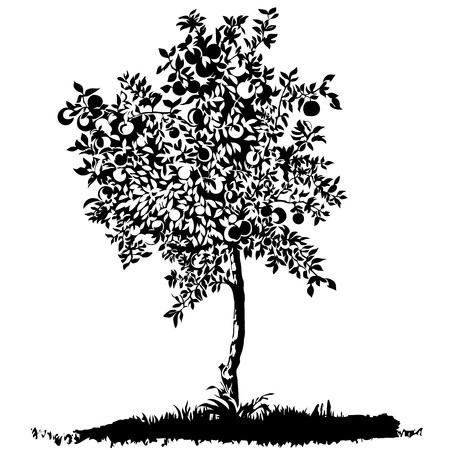 arbol de manzanas: Silueta de un joven �rbol de manzanas en prado, ilustraci�n vectorial editable