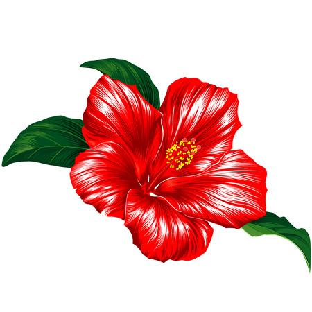 Rode Hibiscus bloem bloesem met bladeren Stock Illustratie