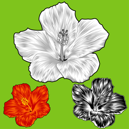 beautiful red hibiscus flower: Hibiscus Flower Blossom Variations