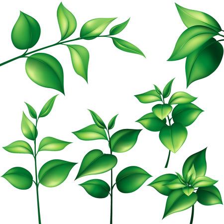 Set van verschillende takken met groene bladeren Stock Illustratie