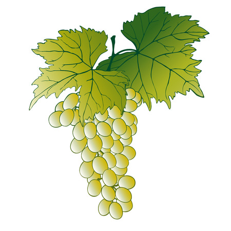 bunch of grapes: Grapes With Leaves