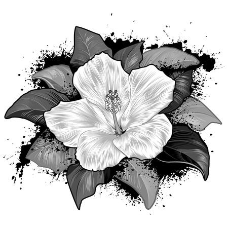 Hibiscus Bloem Tekening Op Witte Achtergrond Stock Illustratie
