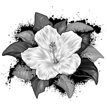 Hibiscus Flower Drawing On White Background Vector