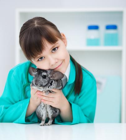chinchilla: Grey chinchilla and doctor Stock Photo