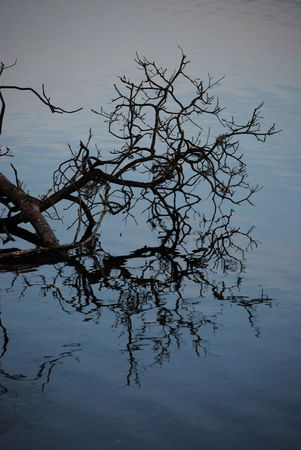 ard: a tree reaching out over the Loch Ard, Scotland and its reflection in the water  Stock Photo
