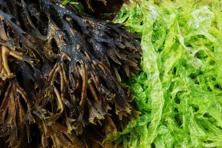 close up of green and brown algae Stock Photo