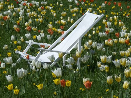 deck chair standing on a lawn dotted with flowers photo