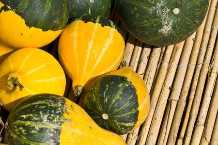 beautiful fresh pumpkins in the sunshine in autumn photo