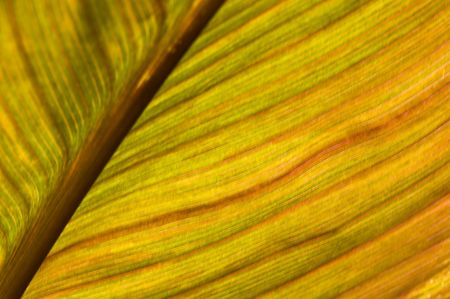 dof: macro of a leaf with shallow dof Stock Photo