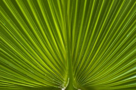 macro of a leaf with shallow dof photo