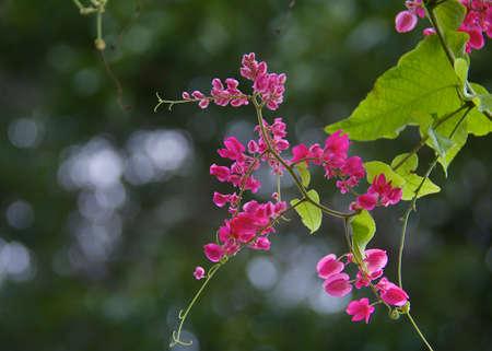 pink heart flower Reklamní fotografie