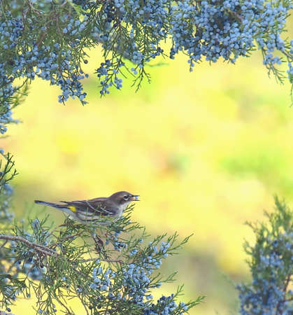 warblers: A little cute bird on the tree.