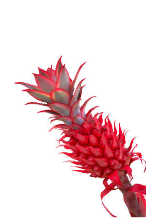 Red pineapple on white background