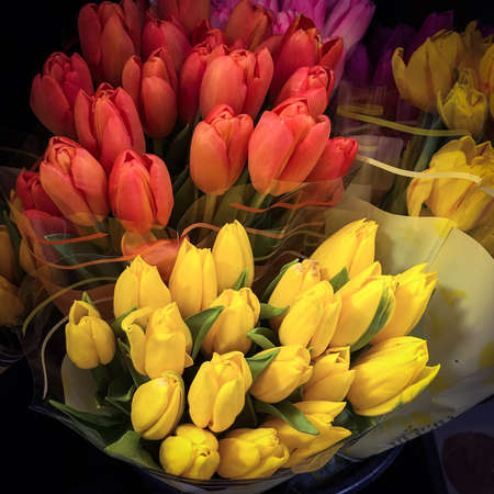 red tulips: Yellow tulips and red tulips in vase Stock Photo