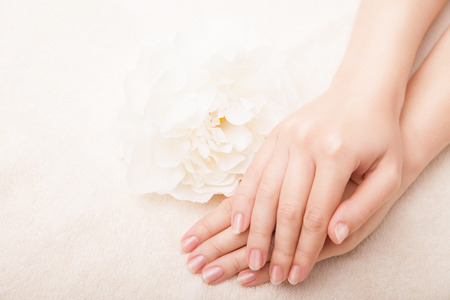 french woman: Beautiful hand with perfect nail french manicure and white flower Stock Photo