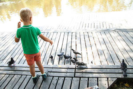 Little kid feeding pigeons on street in summer day in park