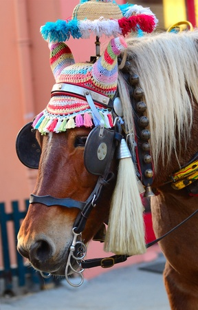 the trappings: a horse in traditional Savoy harness, Chamonix, France