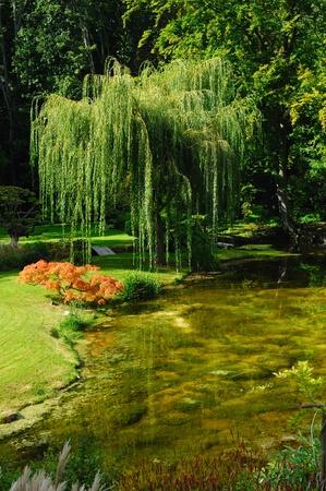 japanese garden Standard-Bild