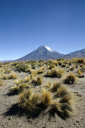 Snowcapped volcano with a lot of yellow bushes, typical for Argentina. Stock Photo - 2875107