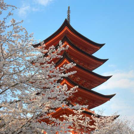 Classic Shinto Pagoda with full blossom cherry trees at Miyakojima, Japan.