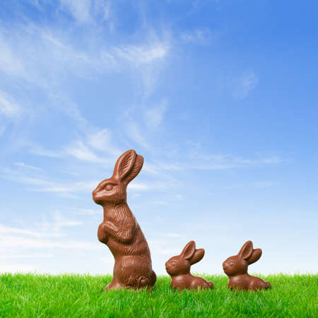 Three nice chocolate easter bunnies on a fresh meadow. photo