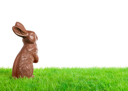 easter egg hunt: Chocolate easter bunny on a meadow  Isolated on white