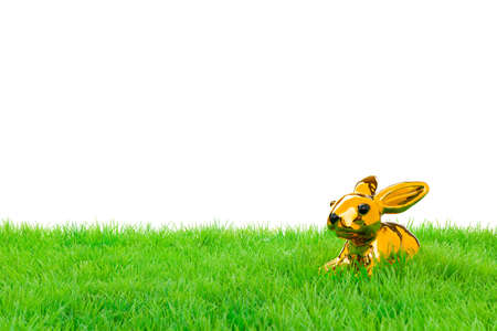 Golden easter bunny, sitting in bright field  Isolated on white  photo