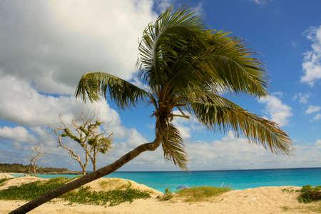 Palm Tree Sint Maarten Stock Photo