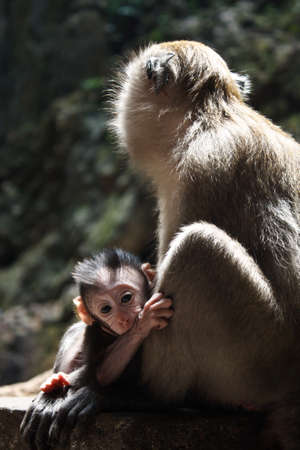 Monkey with its baby Stock Photo