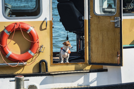 life jacket: Dog in a life jacket on board the boat.