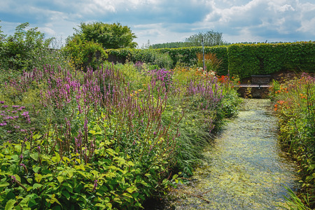 flowering plants: Overgrown decorative pond in the garden surrounded by flowering plants.
